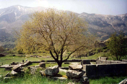 Dodona, oldest oracle in Greece. I sat on one of the rocks and listened to Zeus speak through the rustling leaves before I left for the Holy Mountain.