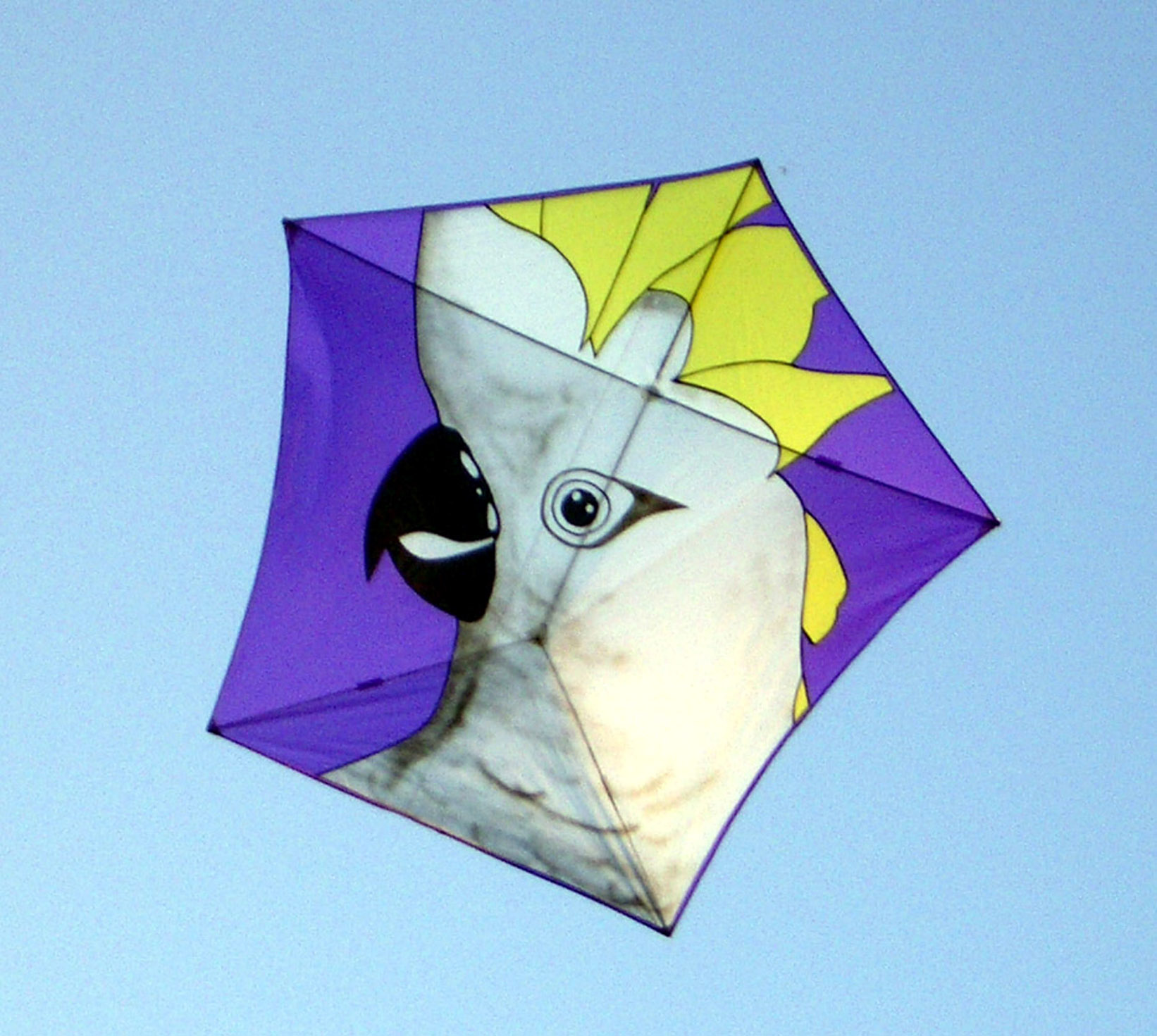 Galerry design ideas kites