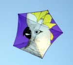 Cockatoo design, made and flown by a friend.