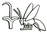 The rush and the bee, hieroglyphs from the royal title signifying King of Upper and Lower Egypt.